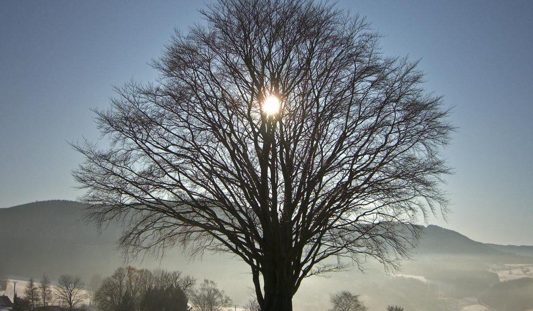 Sunday 22 Dec 2019 – Happy Winter Solstice!