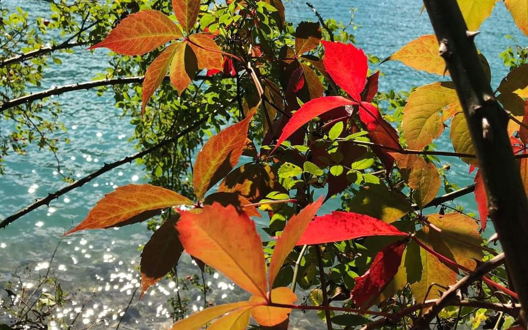 Wunderschönen Herbstbeginn!